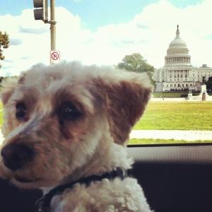 Curly goes to Washington