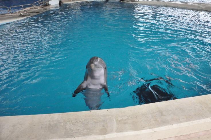 dolphin at baltimore aquarium