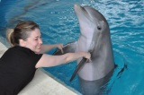 """Swim"" With Dolphins"